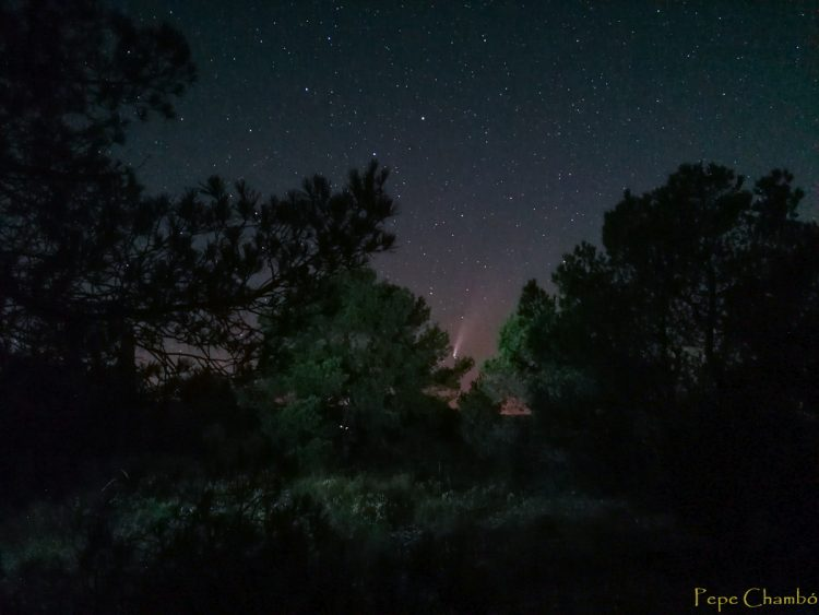 NEOWISE bosque